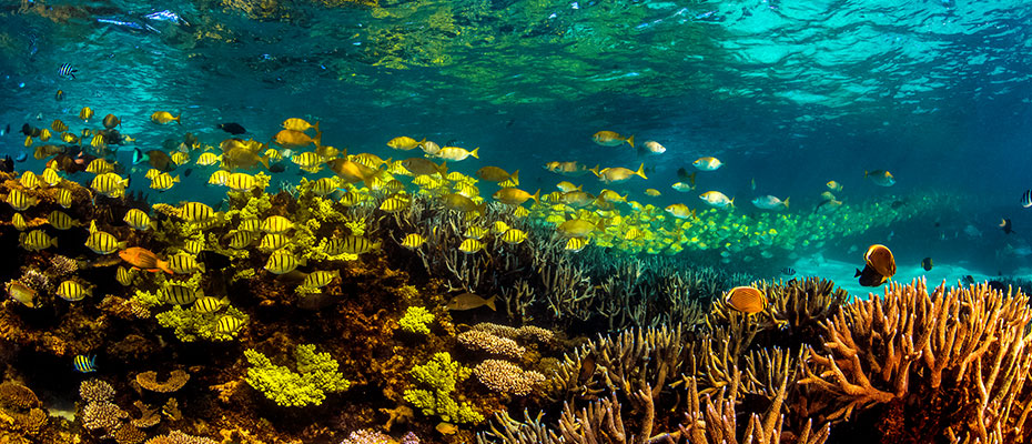 Orlebar Brown - Life Underwater