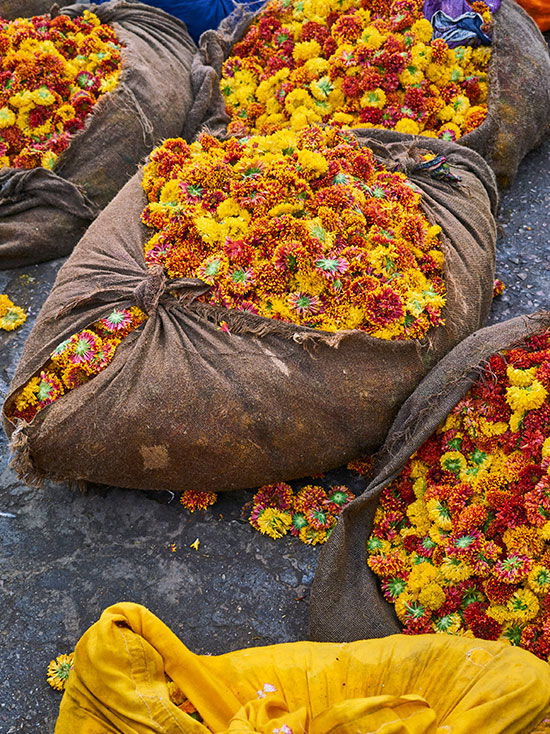 Orlebar Brown - Wholesale Flower Market (Phool Mandi)