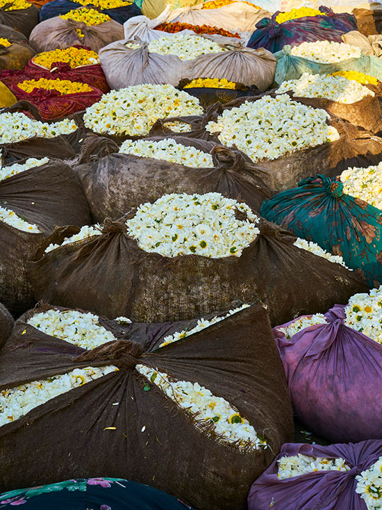 Orlebar Brown - Wholesale Flower Market (Phool Mandi)